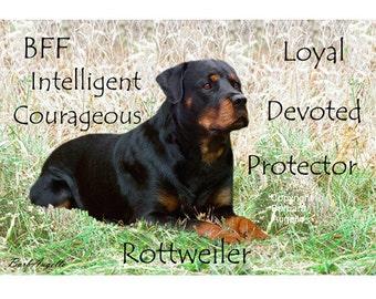 Rottweiler, Rottweiler Gift, Rottweiler Art Print, Rottweiler Traits