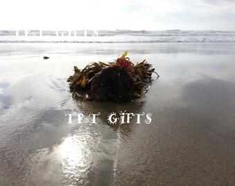 Ocean Bouquet - 3 images *Digital Download*