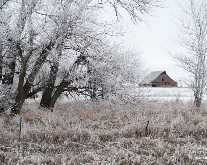 Barn Photo Barn Photography Snow Photography Frosty Barnwood Aspen Trees Birch Trees Farm Scene Winter Farm Photography by Nicole Heitzman