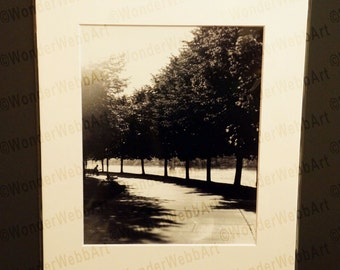 Riverfront Park Avenue of Trees 8x10 Black and White Photo Print