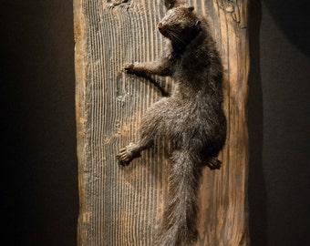 Taxidermy Mount Black Squirrel