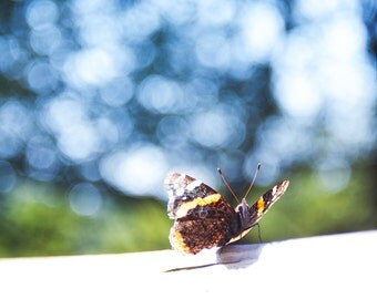 Insect Photo Print. The Ethereal Collection: Zephyr (Orange and Brown Butterfly, Insect Portrait, Dreamlike, Butterfly Wall Decor)