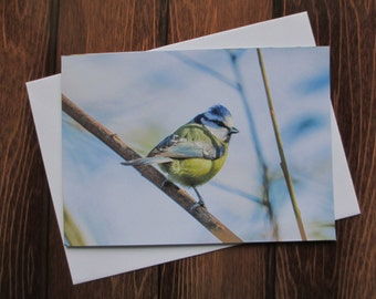 Wildlife Greetings card C5 - Bluetit