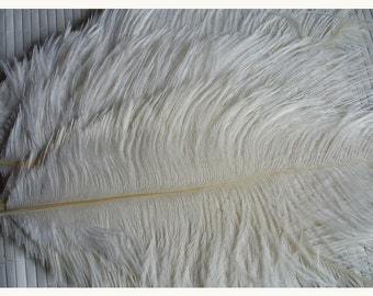 1 feather for various confections * feathers F 112