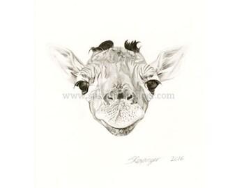 Giraffe Head Original Drawing