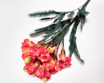 Acacia Bush Plant