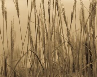 Nature's Golden Grass