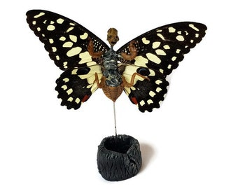 Fairy Specimen - Naturally Mummified- Odd Creature With Butterfly Wings - Preserved Specimen - Dead Fairy