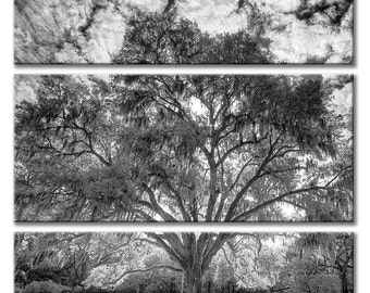 Tri Panel Wood Float Plaques with Black & White Tree Photography for a Triptych Wall Art