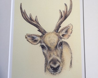 Stag pastel & pen limited edition print