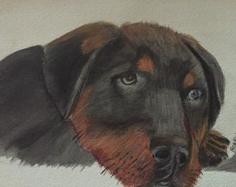 Rottwiller puppy original watercolor  on heavy paper signed