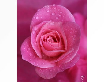 """Pink Wall Art of a Beautiful Pink Rose, Fine Art Print, Flower Photograph, Pink Wall Decor, Pink Fine Art Photograph """"Pretty and Pink"""""""