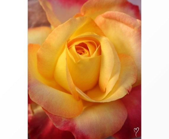 Yellow Peach Decor Print, Yellow Flower Art, Rose Art, Flower Art, Peach Wall Art, Rose Print, Flower Print, Flower Photography