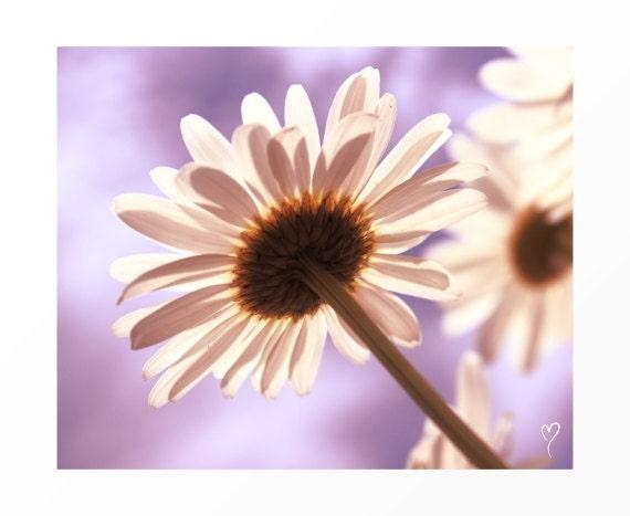 """Light Purple Print, Flower Wall Art, Daisy Art Print, Flower Fine Art, Wall Decor """"Reaching for the Sun"""""""