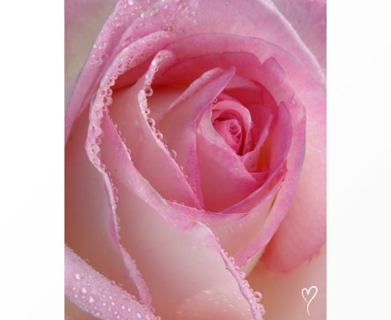 "Light Pink Photograph of a Rose, FLORAL PHOTOGRAPHY, Pink Art Print, Pink Print, Modern Home Decor, Gift for Her, ""Petals and Dew Drops"""