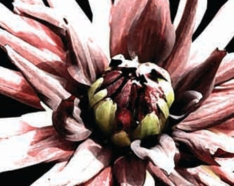 Black and White and Red Dahlia Wall Art