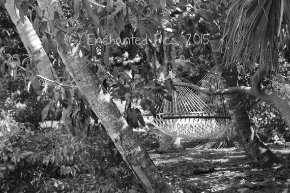 Tropical Photography: Island Hammock- nature photography, trees, hammock, outdoor, plants