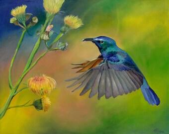 Hummingbird  11 x 14 Matted Prints