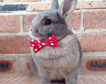 Red and white bow tie, pet rabbit bow tie, pet rabbit bows, rabbit accessories, pet rabbit clothing
