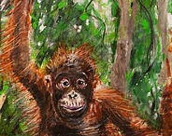 Orangutan Puyol