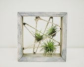 Square Wood Air Plant Holder - Organic Cording
