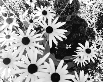 Black and White Flowers Printable Photograph