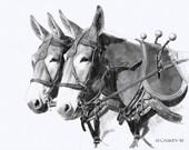 Sorrel Draft Mule Team print from pencil drawing ltd ed of 50