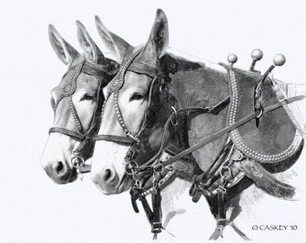 Sorrel Draft Mule Team print from pencil drawing ltd ed of 50