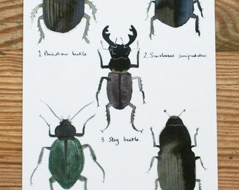 Postcard, 'Beetles Local to the Dordogne'