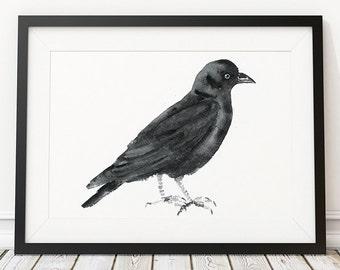 Jackdaw print Nursery art Cute bird watercolor ACW105
