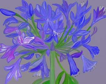 Agapanthus, Limited Edition (1 of 50) Signed and Framed and mounted A5
