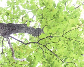 Woodlands Photography, Nature Photography, Green Trees Photography, Nature Photo Print
