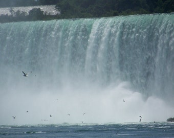 Birds Flying over Niagara Falls