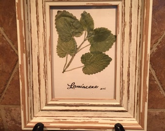 Framed botanical - mint