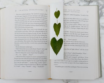 Real botanical bookmark with heart-shaped leaves