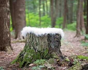 Newborn Tree Stomp Digital backdrop