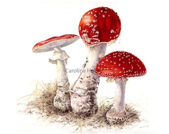 Limited Edition Giclee Print from original watercolour - Fly agaric botanical
