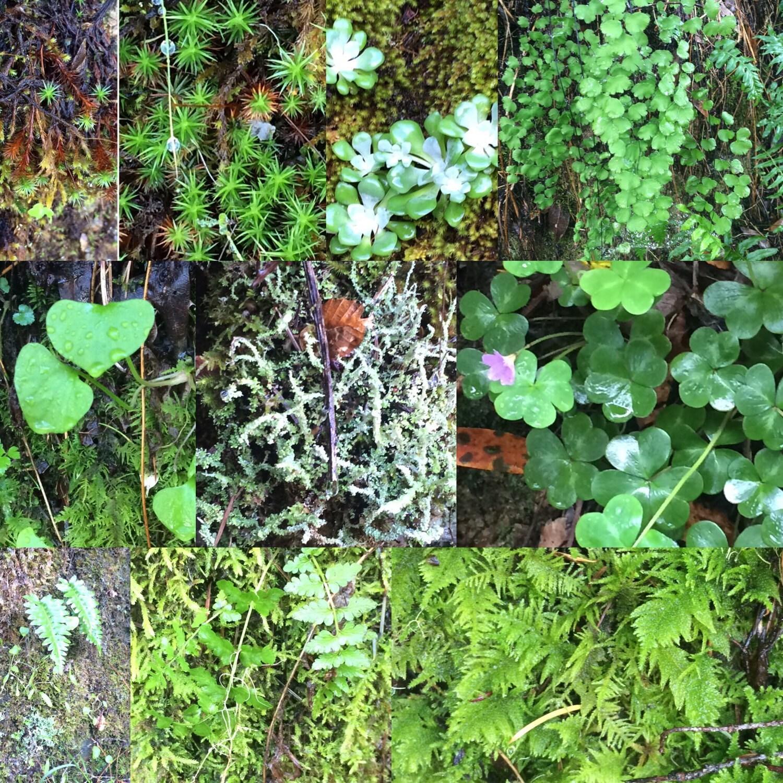live moss fern terrarium plants mix for relaxing live. Black Bedroom Furniture Sets. Home Design Ideas