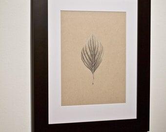 "Botanical Drawing: ""Cornus"" / Dogwood Leaf FRAME INCLUDED"