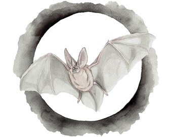 Big-eared Bat (PRINT)