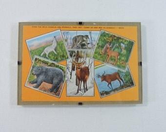 Framed vintage postcard with woodland animals