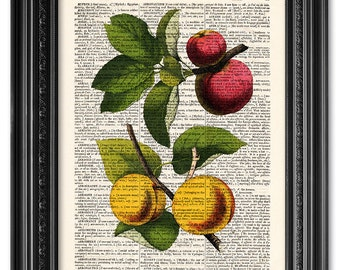 Apple an Apricot, Kitchen Print, Dictionary art print, Vintage book art print, upcycled dictionary page, Home Wall Decor, Poster [ART 082]