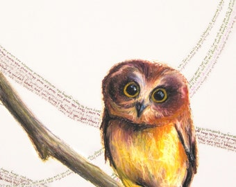 """Saw Whet Owl """"Say What? (Little Owl)"""" Giclee Print"""