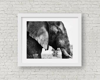 Ngorogoro Elephant