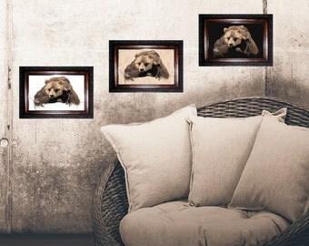 print, poster, bear illustration, bears, animals, decoration, gift