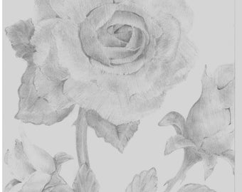 The Roses (Prints) 5x7