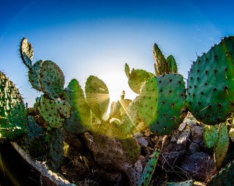 Cactus Spotlight