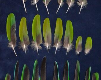 24 pcs miscellaneous amazon parrot feathers