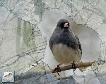 Junco Fine Art Bird Photograph Through Broken Glass Window Gray Wall Decor Songbird Nature Photo 8x10 Photo Collage