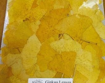 Ginko leaves fall